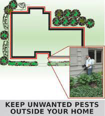 Pest Prevention Spraying