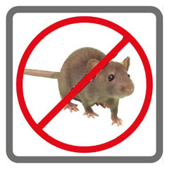 Rodent Control Rat and Mice Removal