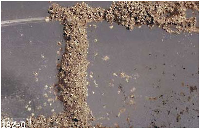 Termites -Subterranean